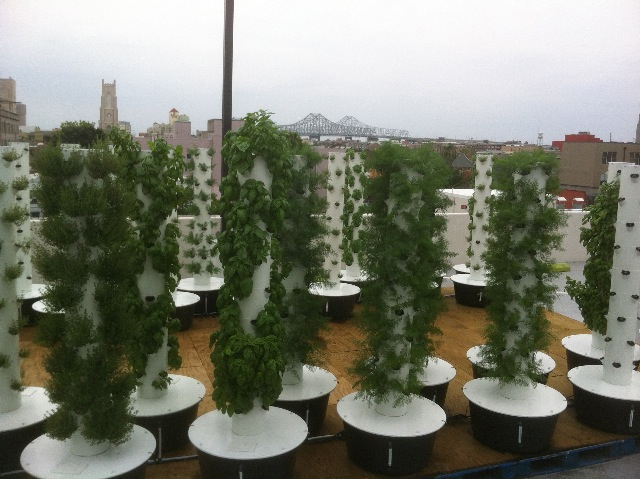 Sustainable Aeroponic Rooftop Garden Created Above